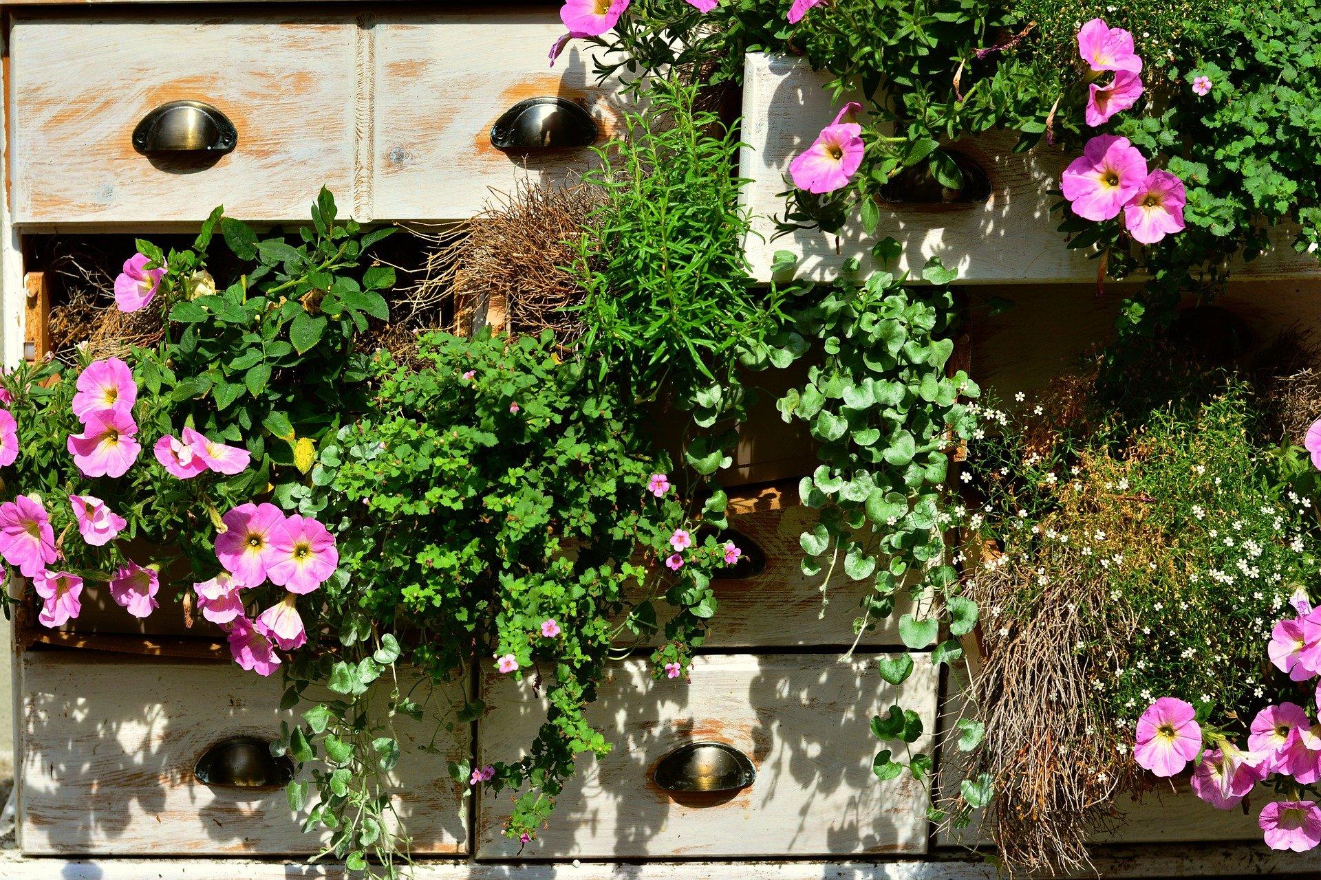 10 Best Balcony Plants For Sunny Balconies
