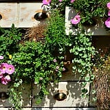 10 Best Balcony Plants for Sunny Balconies