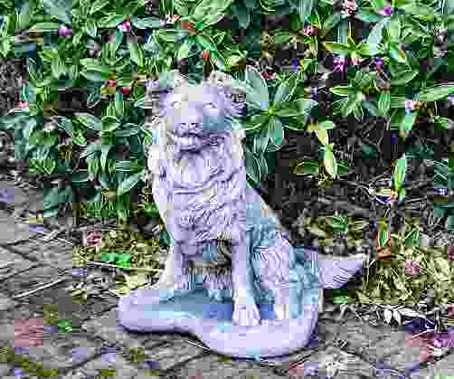 Collie Pup Statue